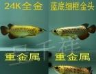 龙鱼 金龙鱼 过背 金龙辣椒 红龙 红龙鱼 魟鱼