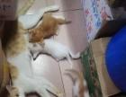 有小猫卖HHH