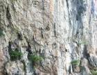 长野冰原探险户外攀岩体验