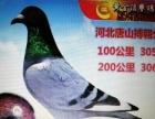 玩赏鸟 200元