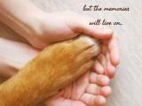 宠物火化,宠物殡葬,动物火葬,宠物善终服务,宠物安乐