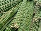 承德竹竿,竹片,菜架竹,园林绿化支撑杆