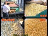 农用除杂机 玉米瘪子 霉变粒 16-25吨/h 自动清理