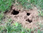 博罗白蚁防治中心 专业资质 先进技术 经验丰厚