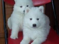 福州宠物领养中心 大量狗狗免费送人