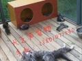 北京家庭宠物寄养猫猫24小时陪伴长期散养地暖可接送