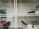 寄养兔子,猫咪寄养,深圳可接送