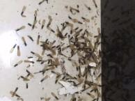 白蚁防治服务家庭灭白蚂蚁别墅灭白蚁庭院灭白蚁