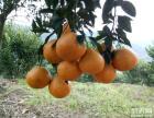 成都周邊水果采摘