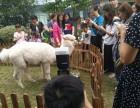 上海青浦区草泥马转租-香猪出租-迷你马租赁-新品发布会展览