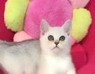 南京喵了个咪出售各种名品猫咪