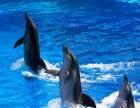 玩港澳旅游2天1晚海洋公园 港澳全景休闲欢乐游