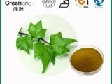湖南绿洲植物生产厂家 常春藤提取物 规格可定制