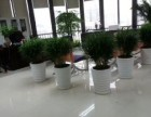 广州办公室植物租赁花草出租价格大优惠