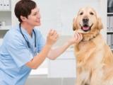 深圳市龙华区龙华中心区24小时宠物急救上门治疗