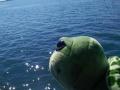 黄骅港海上一日游,脱网捕鱼吃喝