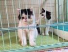 重庆哪里有最正规最大的宠物店,我想养只加菲猫
