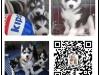 襄樊全国发货视频看狗