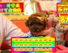 北京买泰迪熊犬 泰迪熊犬 当时化验健康签协议
