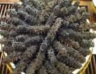 长春高价回收海参高价回收东阿阿胶高价回收冬虫夏草