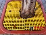 市政绿化25MM厚玻璃钢树篦子护树板清仓销售中 枣强双利