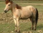 哪有养马场 孩子骑得矮马哪里有