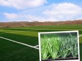 环保耐用人造草坪