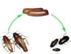 蟑螂的寿命灭蟑螂,洛阳杀虫公司,灭蟑螂药,杀虫药