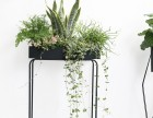 武汉室内植物花卉租赁维护,武汉室内外苗木花木维护租售