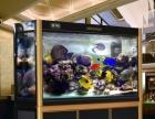 鱼缸店装让 鱼缸存货本钱转让清货
