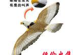 厂家直销 电动飞鹰 电动老鹰 发光 发声电动飞鸟 电动玩具