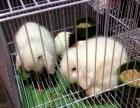小白兔仓鼠金丝熊巴西龟