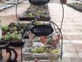 周末多肉植物园种植、手绘花盆、亲子游戏