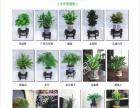 成都高品质办公室植物租摆、植物销售、绿化设计施工等