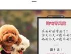 幼犬专用狗粮泰迪贵宾小型犬通用型2.5kg阿拉斯