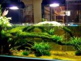 鱼缸维修鱼缸消毒更换滤材鱼缸用品清洗鱼缸