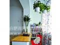 办公室绿植租摆,养护,免费上门设计。