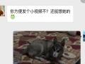 家庭式宠物寄养,58诚信保障 大庆路 东高新