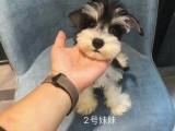 随州纯种金毛幼犬狗狗出售 健康质保