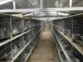 兔笼 纯种种兔 加工饲料机械