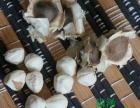 云南满泽辣木籽功效与作用,云南辣木籽厂家批发,昆明辣木籽