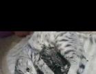 两母一公成猫全部带走