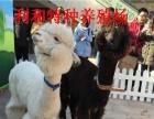 宠物马、矮马、羊驼出租、动物租赁、百鸟展活动策划