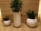 重慶植物租賃 植物墻 仿真植物墻 假山 室內外綠化養護