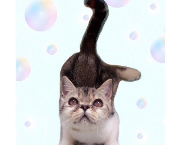 加菲弟弟找新家 宜昌包配送也可上门看猫