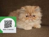 柳州哪里有宠物猫出售,柳州哪里有卖纯种加菲猫价格