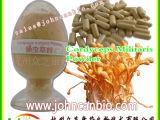 专业生产QS认证蛹虫草粉-腺苷0.2以上资质齐全固体饮料片剂代加