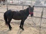 纯种汗血宝马 骑乘马多少钱一匹 出售各种马 价格便宜