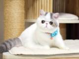 安庆纯种猫咪现货出售本地可上门挑选外地视频挑
