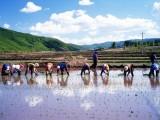 唐山蔗味道运用互联网思维打造言农商城从而促进现代农业发展